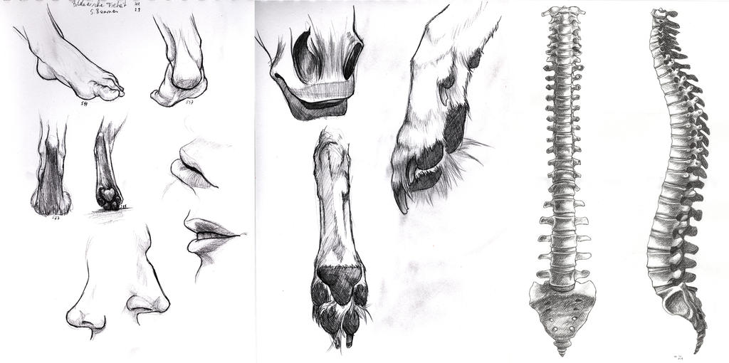 more anatomy studies by Thianari
