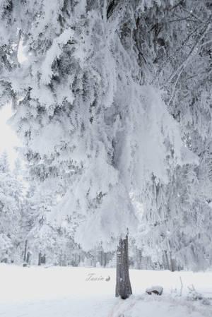 Frozen Fairytale 16 by Taoin