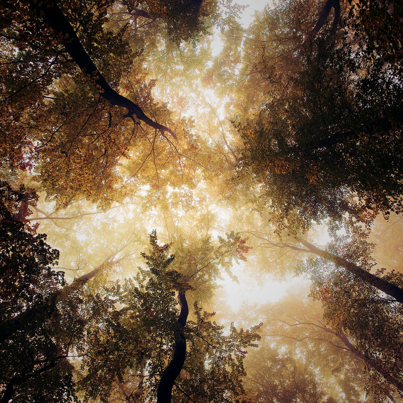Vertigo by Al-Baum