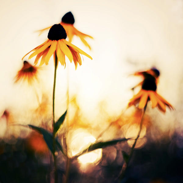 Orange Tog_by_aL_baum