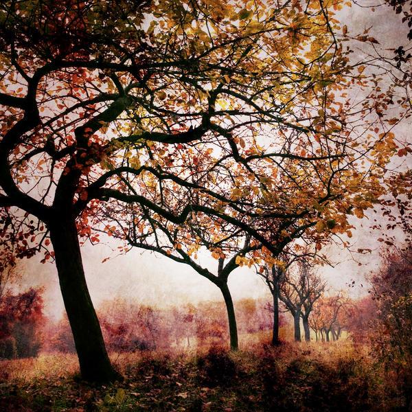 Bloody autumn by Al-Baum