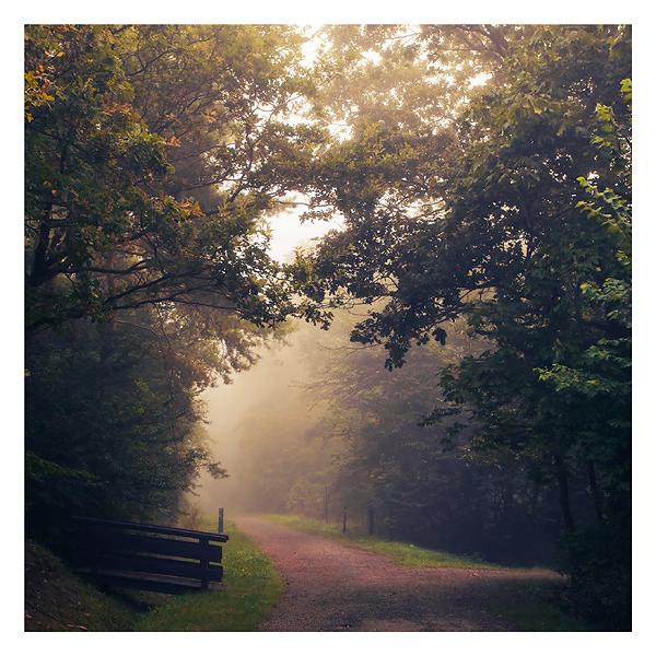 First steps in autumn by Al-Baum