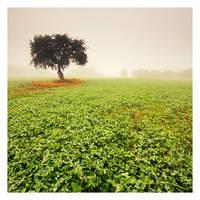 Clover field by Al-Baum