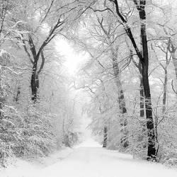 White way by Al-Baum