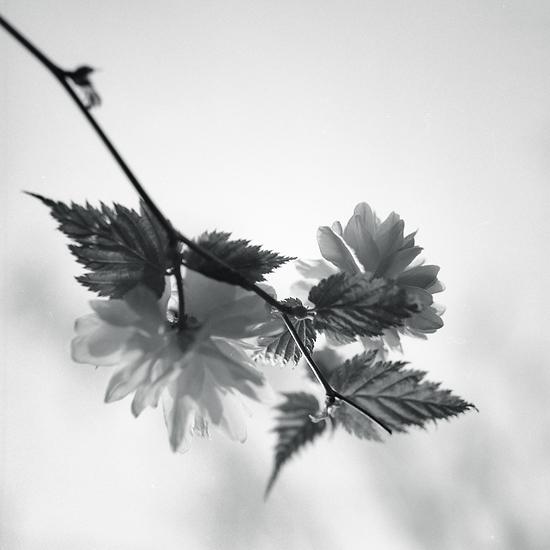 t_0O by Al-Baum