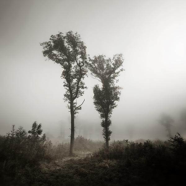 Two by Al-Baum