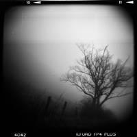 Land 4 by Al-Baum