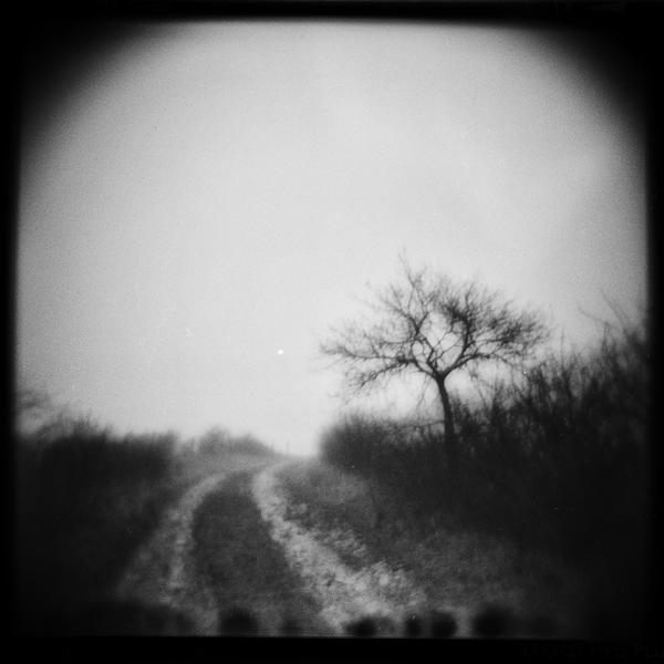 Land 5 by Al-Baum