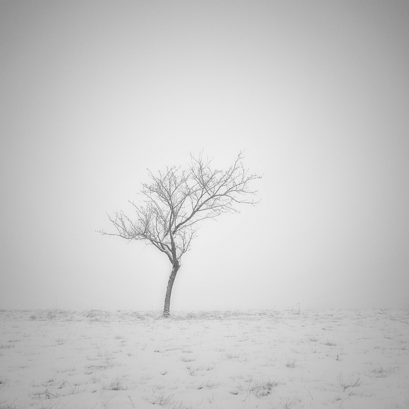 The soul of a tree by Al-Baum