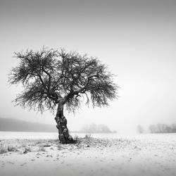 ### by Al-Baum