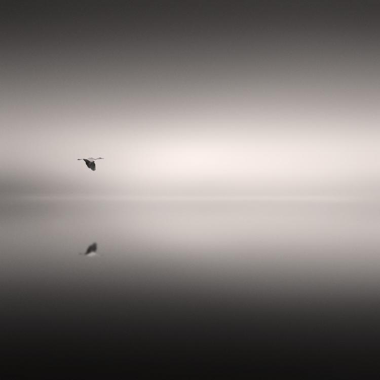 Flight through forgetting by Al-Baum