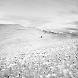 Meadow house by Al-Baum