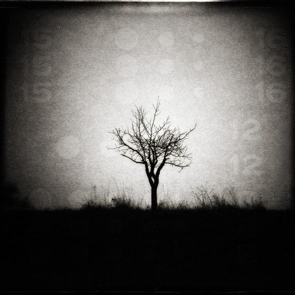 Math Tree by Al-Baum