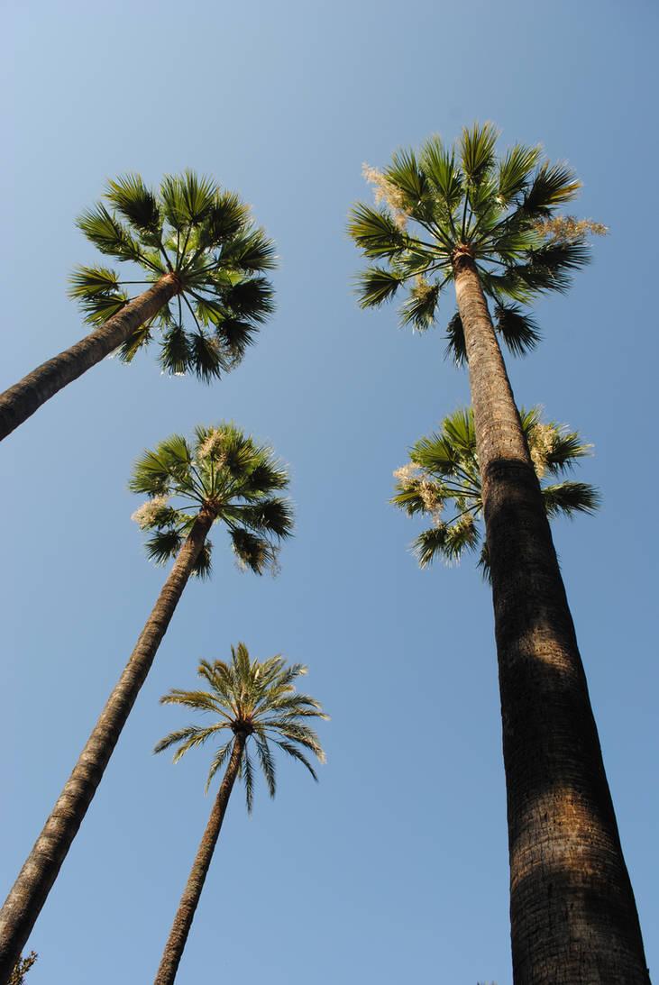 xxx palm
