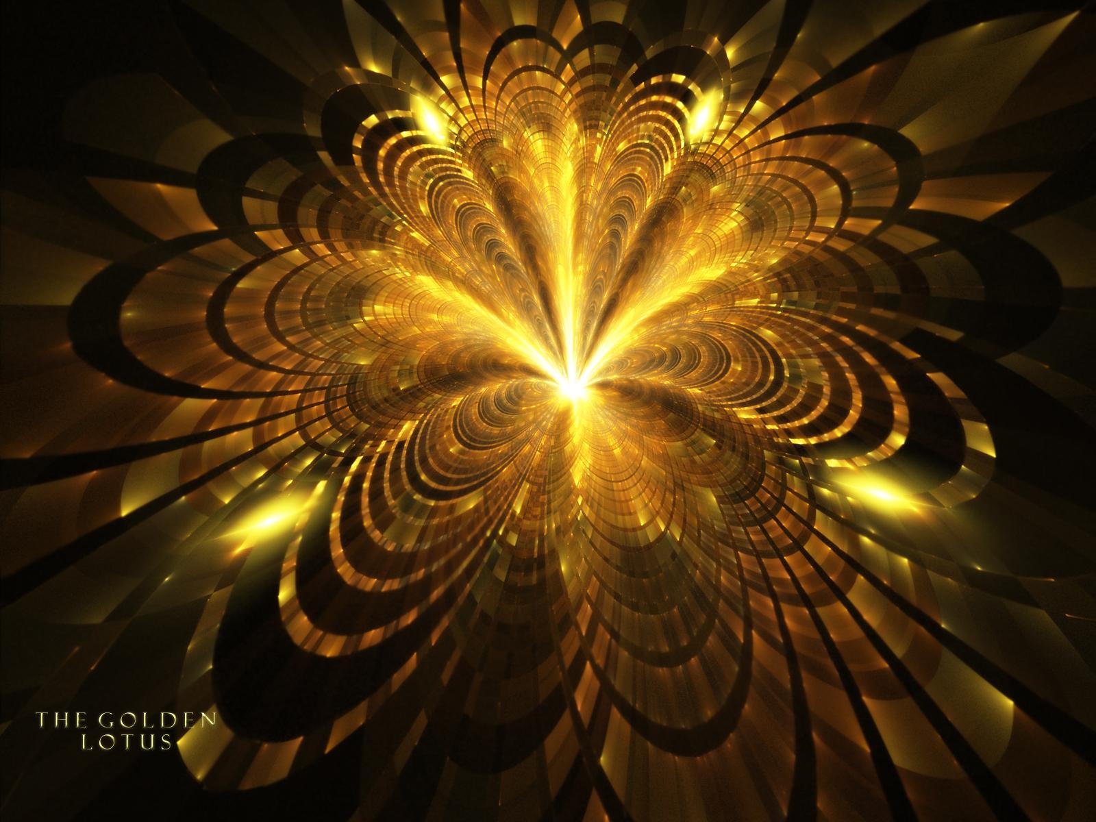 Golden Rose Wallpaper The Golden Lotus Wallpaper