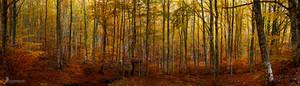 casentino forest