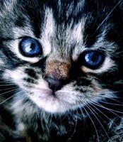 Blue eyed by Biljana1313