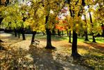 Autumn in the park 01