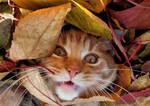 Covered By Autumn by Biljana1313