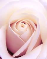 White or pink? by Biljana1313