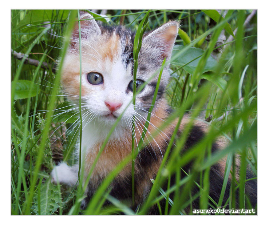 Chat dans l 39 herbe by asuneko0 on deviantart - Herbe a chat ...