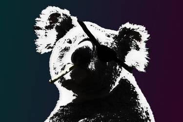 Koalas are pimps by jochemb