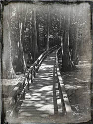 Swamps of Old by bullitt2341