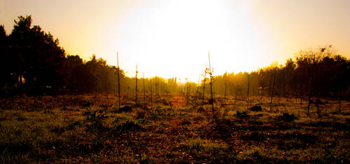 Sunrise by ovsun