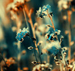 ...forget-me-not...