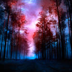 magical forest II
