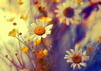 wildflowers by BaxiaArt