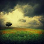 makowe pole by BaxiaArt