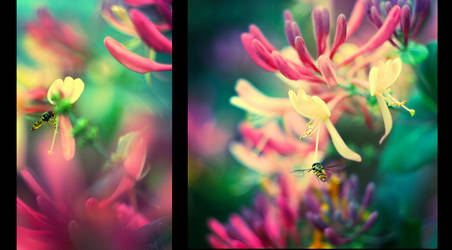 full of colours.. by BaxiaArt