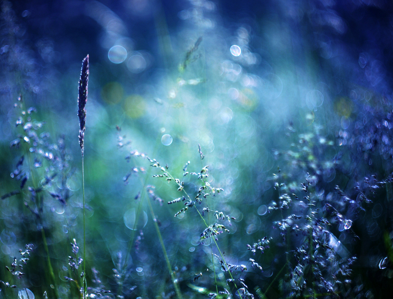 Magical Pictures 105