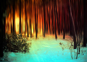 winter forest by BaxiaArt