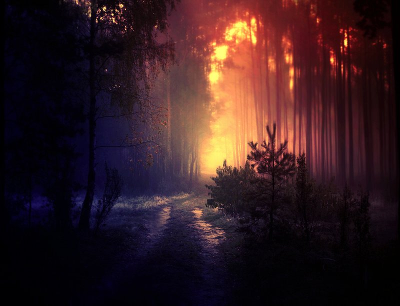 mystical forest by BaxiaArt on DeviantArt