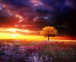 sweet sunset