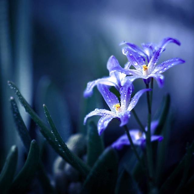 blue diamonds by BaxiaArt