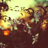 little sun by BaxiaArt