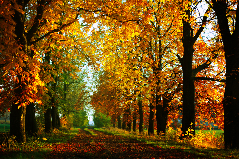 Golden Autumn II by BaxiaArt