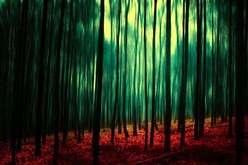 dark forest II by Baxi...