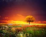 sunset tree I