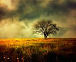 golden field2 by BaxiaArt