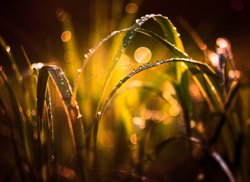 ...light and rain... by BaxiaArt