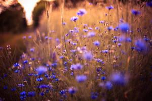 Summer light by BaxiaArt