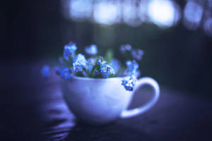 ForgetMeNot by BaxiaArt