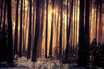 Forest Light 2019
