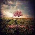 Sakura by BaxiaArt