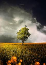 Dark Field by BaxiaArt