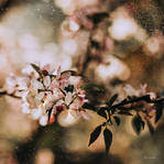 Magical Spring by BaxiaArt